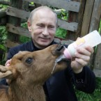 Putin shows his sensitive side by feeding a baby elk in a Moscow park where animals roam free. (AP Photo/Alexei Druzhinin, Pool)<span class=