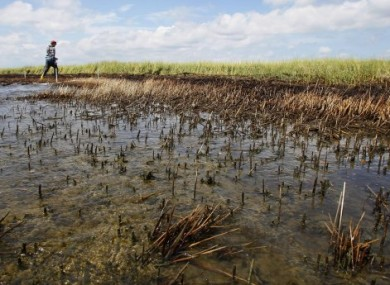 A  worker walks past marsh grass that was impacted by oil from the Deepwater Horizon oil spill in Bay Jimmy on the Louisiana coast.