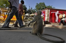 Commonwealth Games unveil secret policing weapon… monkeys