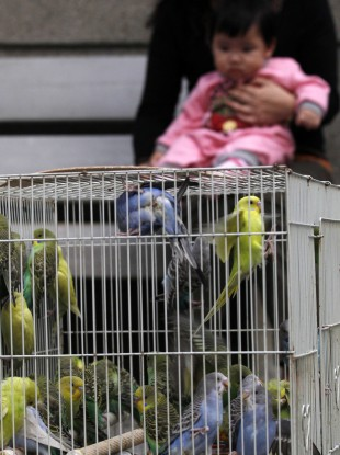 A cage of birds displays at a market in Hong Kong. The company was forced to kill all poultry the last time there was a major avian influenza scare.