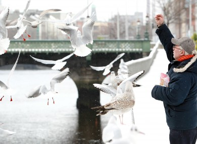 A man feeds seagulls by the River Liffey in central Dublin amid the snow yesterday.