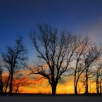 Trees are silhouetted against the early morning Kansas sky in the US - although the temperatures there are still sub-zero.<span class=