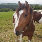 Now Alfie is thriving. Since being brought to the IHWT he has improved in leaps and bounds and is described as a 'wonderful little guy with a smashing personality'. He is one of the animals needing sponsorship.