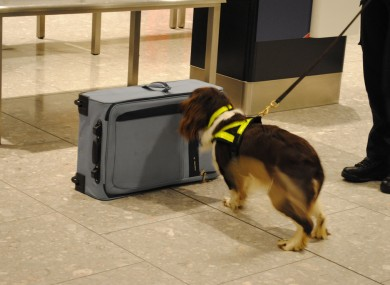 Irish customs officers, like those in the UK, use sniffer dogs to identify large sum of cash stored in luggage.
