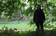 """Vast majority"" of tree-cutting completed on Teresa Treacy's land"