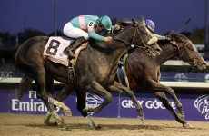 A Bluffer's Guide to… Breeders' Cup Weekend