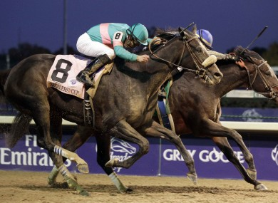 Blame (far side) edges out Zenyatta in the thrilling finish to last year's Breeders' Cup Classic.