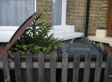 Warning: Don't dump your Christmas tree in the brown bin.