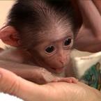 (Image via RTÉ The Zoo)