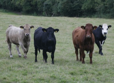 The food and livestock sector was one of the sectors to see an increase in trade last year.
