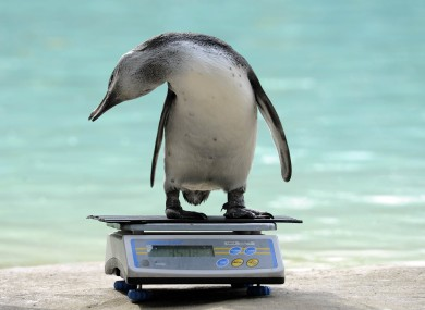 London Zoo Keepers Weigh And Measure 16 000 Animals 183 The