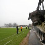 A dog turns up to boost crowd numbers. Kildare's supporter Ted observes the action here and in the second-half opted to stage a canine pitch invasion.
