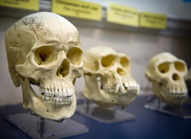 Three skulls in a row showing some of human evolution