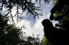 Cabinet abandons plan to sell off felling rights for public forests