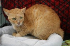 Stowaway cat survives 6,400 mile boat trip from Philippines to LA