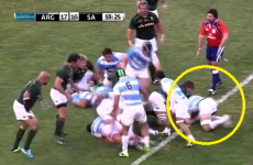 Biting claims dog Argentina after flanker is cleared of eye gouge