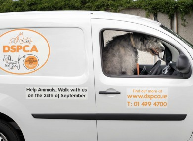Linus the Irish Wolf Hound in one of the DSPCA's new vans
