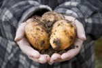 Happy National Potato Day! Here are 7 interesting facts about the humble spud