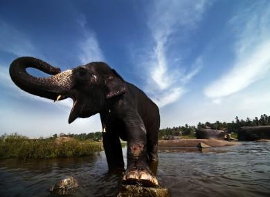 Elephant in India.