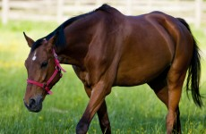 Over 50 horses seized from Cork site