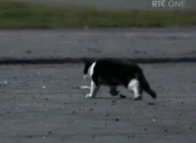 The Love/Hate cat was a (fake) victim of TV violence
