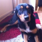 Another appeal for a sweet natured girl who needs urgent foster home.