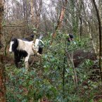 Two other horses close to the bog.<span class=