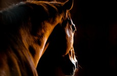 Farmers: 18,000 'useless' horses must be slaughtered to help end crisis