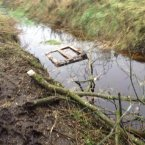 The bog where the horses were found.<span class=