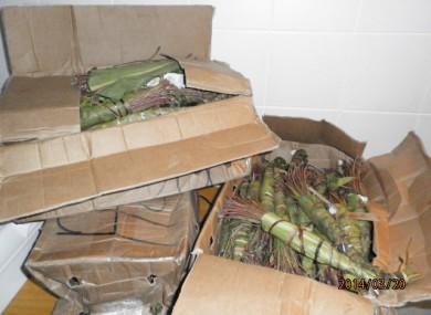 The khat seized by Revenue officials
