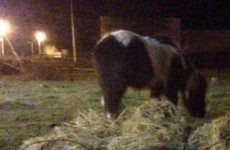 Update: Volunteers have two more days to raise funds to save eight horses