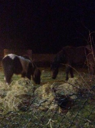 Two of the horses involved.