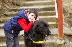 Autism assistance dogs transform children's lives…but they are expensive to keep