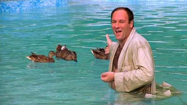 tony-and-the-ducks