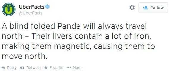 pandafact1