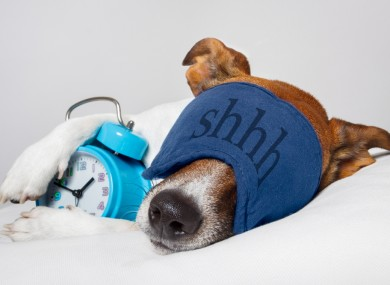Let sleeping dogs lie (or else they won't be able to remember the new tricks you've taught them).