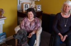 "Irish pet owners use psychic powers to ""talk"" to their dogs"