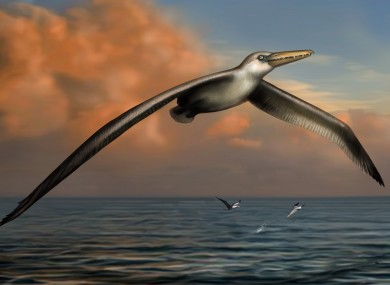 A reconstruction image of the world's largest ever flying bird