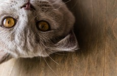 Is your cat compromising your privacy?