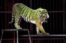 Aaron McKenna: Animal circuses are a shameful cruelty that you should avoid funding