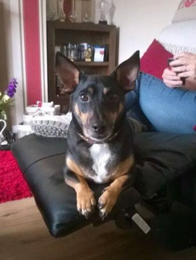'The house is so empty without him': Derry family fear the worst after violent abduction of beloved dog