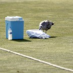 This seagull was looking for a spot of comfort at Hove County Cricket Ground.<span class=