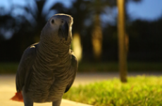 Parrot goes missing for four years, comes back speaking Spanish