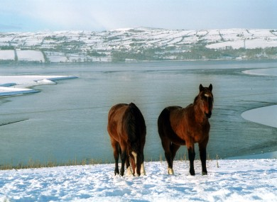 Two horses stand in the snow covered fields along the Derry Road just outside Letterkenny in Co. Donegal.