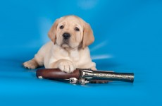 A dog has accidentally shot his owner