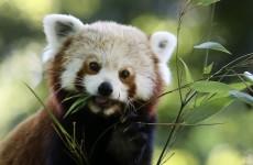 Dublin Zoo had a record-breaking year in 2014