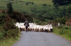 Thousands of farmers to close gate on IFA and start their own group