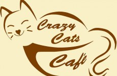 Love cats? Ireland's first cat café is looking for donations