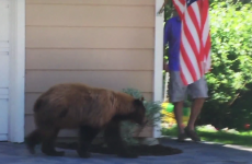 A man had a run-in with a bear… but it didn't end like you'd think