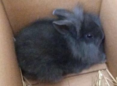 Allan the rabbit